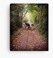 William's Cows Canvas Print