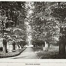 The Avenue, Daventry, 1900 by NorthantsPast