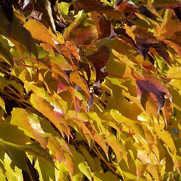 Autumn Leaves - Autumn Leaves by Boscastle