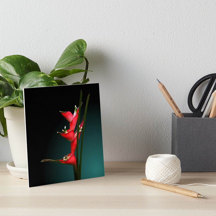 Studio Dalio - Heliconia Flowers Art Board