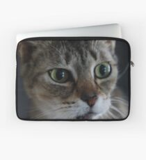 Transfixed Abyssinian  Laptop Sleeve