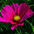 Fractal Flower 1 by Lisa Kent