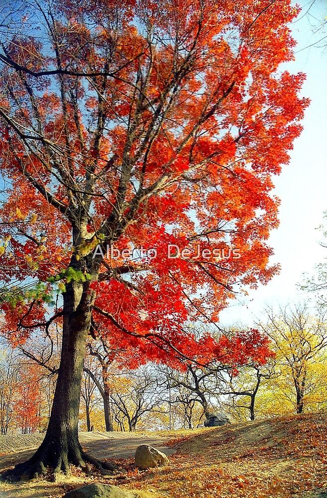 Little Red Tree, Central Park by Alberto  DeJesus