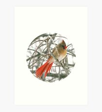 Redbird with Red Tail Art Print