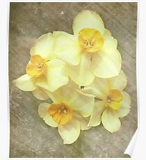 NARCISSUS BEAUTIFUL EYES (Daffodils) Poster