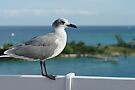 Seagull In Paradise by John Ayo