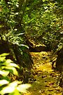 Small Forest Stream by John Ayo