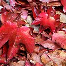Red Carpet of Leaves by Jo Nijenhuis
