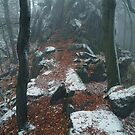 Rocky Path.  In Mysterious Woods by JennyRainbow