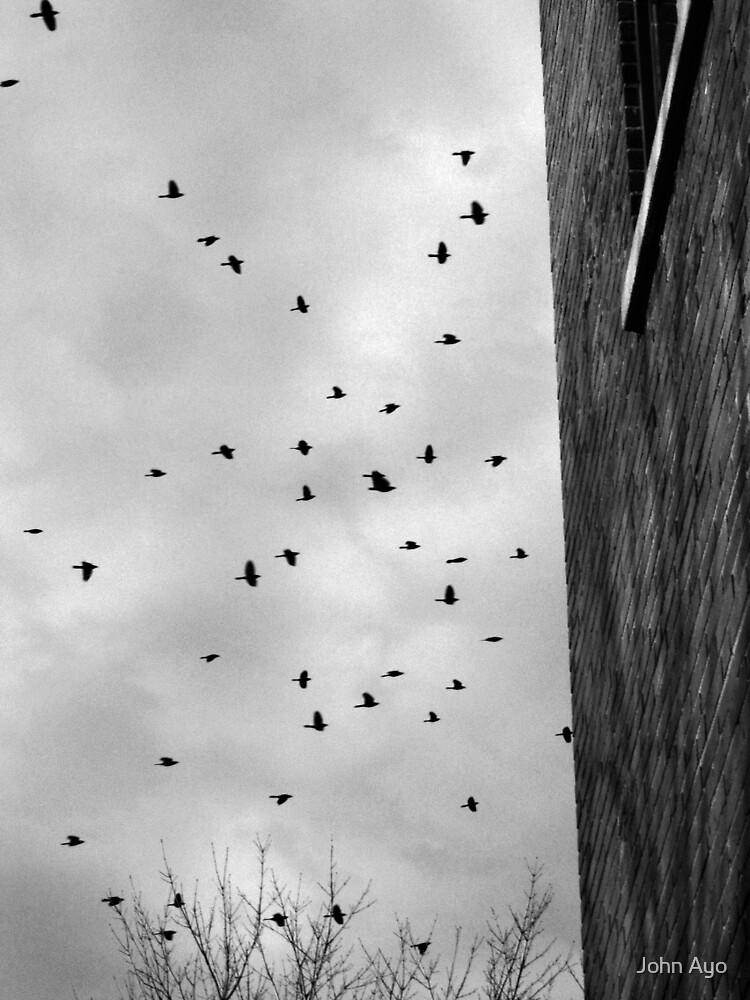 Flock by John Ayo