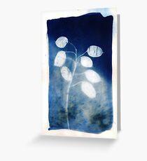 Honesty - Cyanotype Print of Honesty Plant Greeting Card