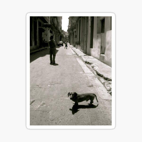 Street Dog Sticker