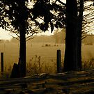 Rain in the Trees - Castle Marter, Ireland by Jenny Hambleton