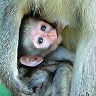 Vervet Monkey by Susan McKenzie Bergstrom
