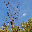 Birds & Moon by Daniel Owens