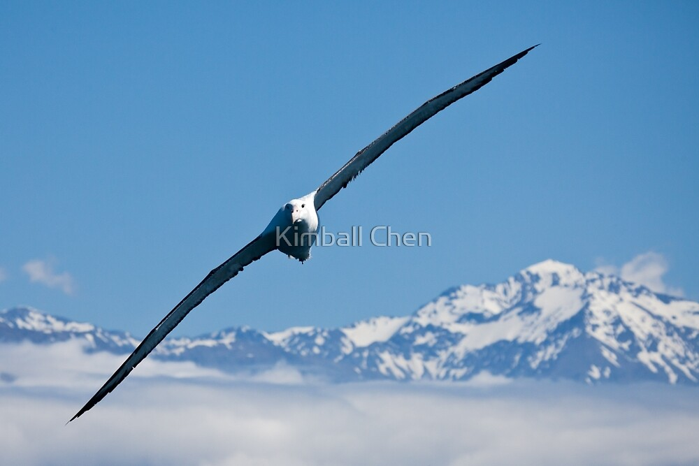 The Power of Flight by Kimball Chen