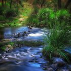 Creek Crossing by Tracie Louise