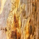 The Tree Bark Collection # 3 by Philip Johnson