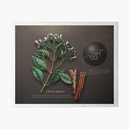 Cinchona officinalis Art Board Print
