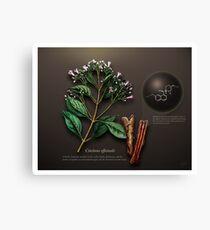 Cinchona officinalis Canvas Print