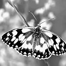 Black & White Butterfly Design by lou16