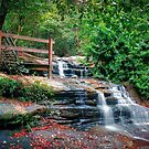 Buderim.... by Tracie Louise