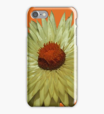 Pretty Paper Delightful Daisy iPhone Case/Skin