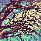 Branches Against a Gentle Sky by Rasendyll