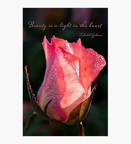 Inspirational rose Photographic Print