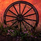 Burnt Orange Cartwheel by humblebeeabroad