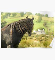A Wild Fell Pony ... Poster