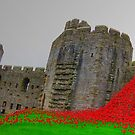 POPPY PERSPECTIVE by NICK COBURN PHILLIPS