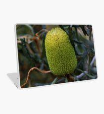 Banksia pilostylis  Laptop Skin