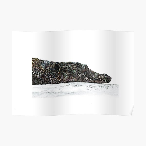 Crocodile Rough and Ready Poster