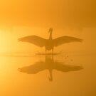Swan by Kasia Nowak