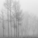 Birches in Fog by April Koehler