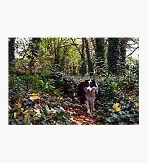 Into the Woods. Photographic Print