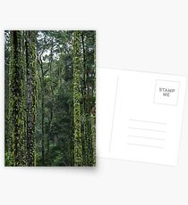 Moss covered Myrtle Beech Postcards
