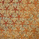 Starfish - Karnak Temple, Egypt by Marilyn Harris