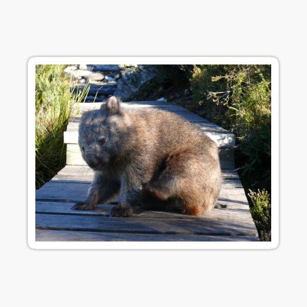 Wombat Wonderings Sticker