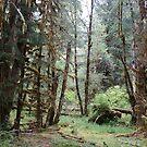 Der Hoh Regenwald von JCDesignsUK