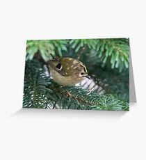 Goldcrest (Regulus regulus) foraging in a fir tree. Greeting Card