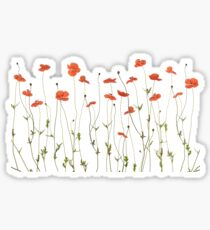 Poppy flowers Sticker