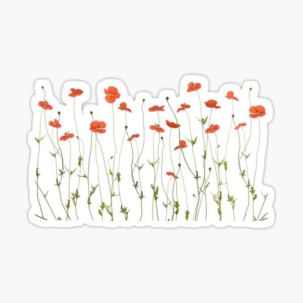 Poppy flowers Sticker