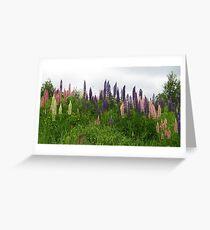 Lupin Panorama Greeting Card