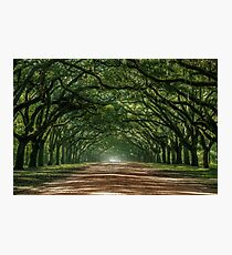 Wormsloe Plantation Oak Lane Photographic Print