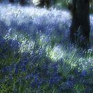 Softly Through The Bluebells by Ann Garrett