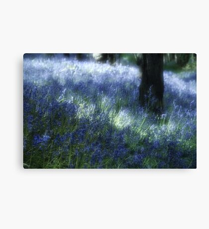 Softly Through The Bluebells Canvas Print