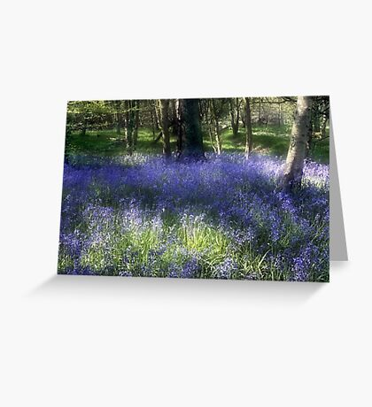 More Bluebells Greeting Card