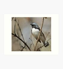 The black throated blue warbler Art Print